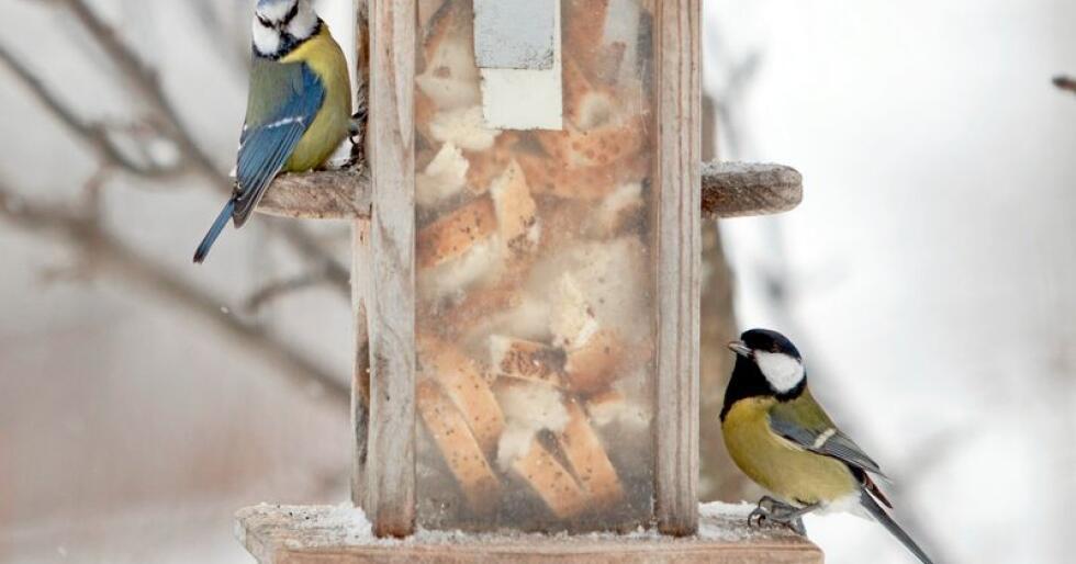 Blåmeis og kjøttmeis på fôringsautomat. De to artene topper lista i tellingen. Arkivfoto: Paul Kleiven / NTB scanpix