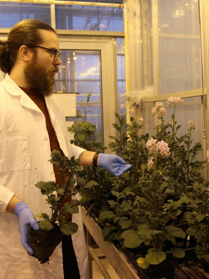 Anders Wulff-Vester er doktorgradsstipendiat ved NMBU og skal forsøke å lage tørråteresistent potet ved hjelp av genteknologien CRISPR. Foto: Kristin Bergo