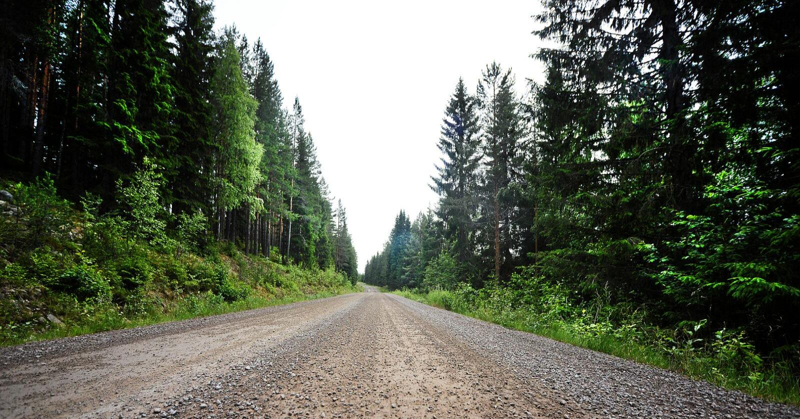 Høyre vil liberalisere konsesjonsbestemmelse på norsk skog. Foto: Siri Juell Rasmussen