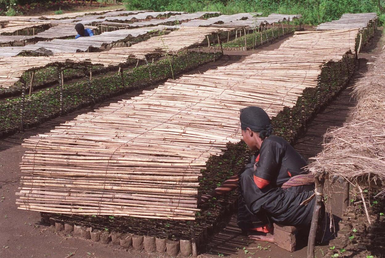 Illustrasjonsfoto frå kaffiplantasje i Etiopia. NTB-arkivfoto: Bjørn Sigurdsøn