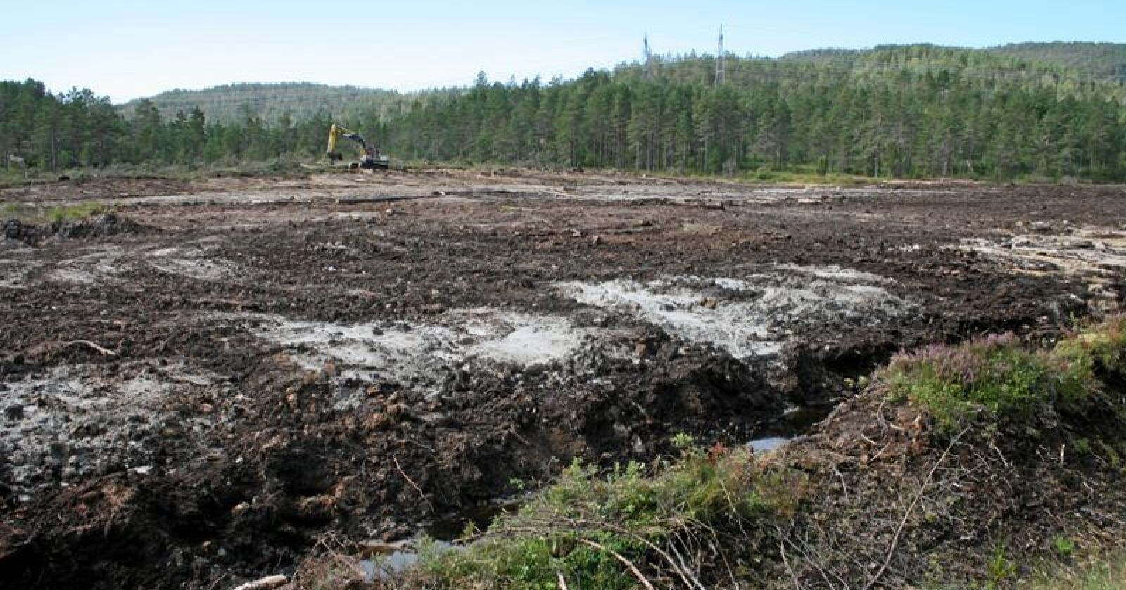 Det aller meste av den dyrkede myrjorda i Norge brukes til gras. Foto: Bjarne Bekkeheien Aase