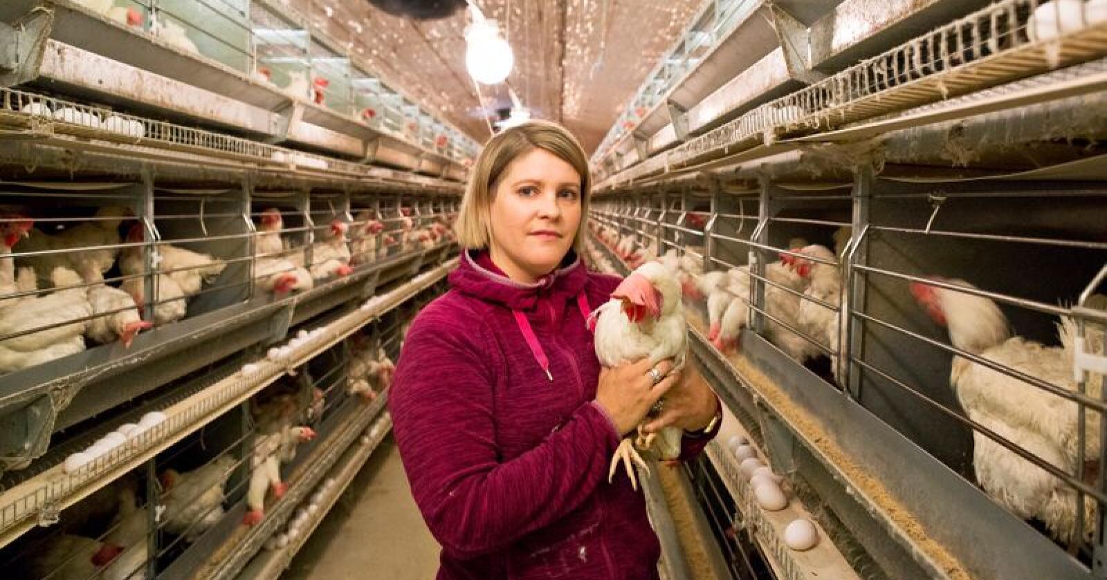 La om: Kristin Spanne Fausk (36) er bonde og eggprodusent på Finnøy utanfor Stavanger i Rogaland. Saman med faren installerte dei nye, moderne miljøbur i 2008/09. No, ti år seinare, vil ei ny stor omstilling til frittgåande bli for tungt økonomisk. Foto: Solfrid Sande