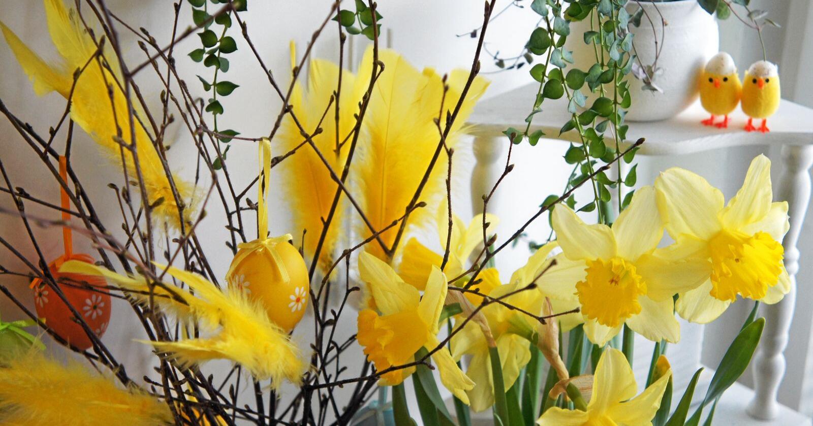 Symbolikk: Kyllinger, egg og bugnende blomster – påsken er full av symbolikk. Foto: Frugan / Mostphotos