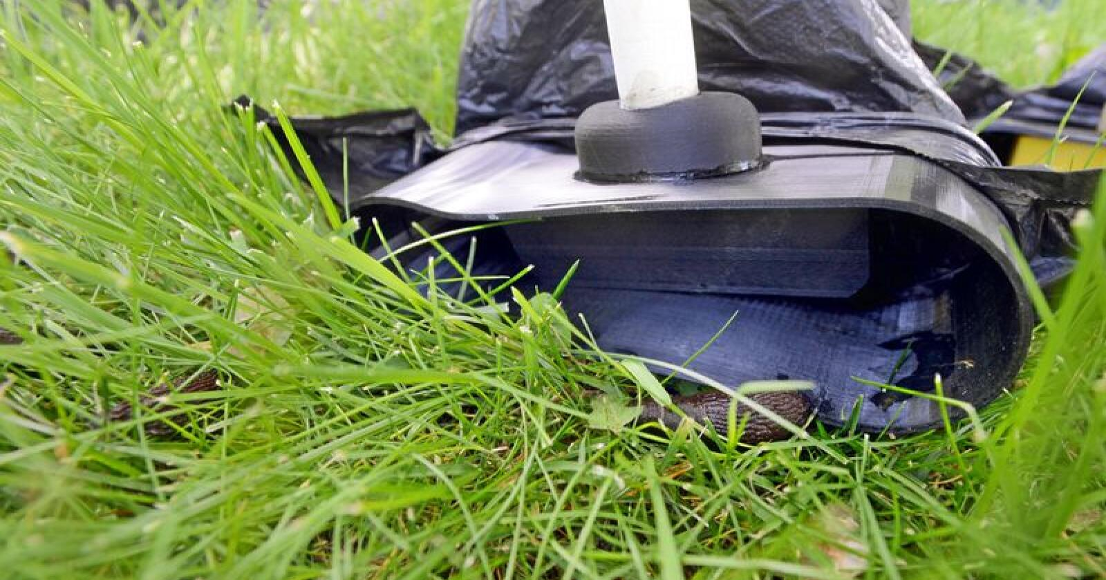 Som hageeier er du kanskje blant dem som sliter med brunsneglen? Foto: Mariann Tvete