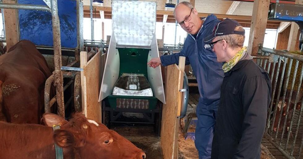 Sverre LR og snakker med fjøsmesteren på Mære Landbruksskole, Arnulv Vestrum, foran Greenfeed-boksen. Den måler metanutslipp fra kua.