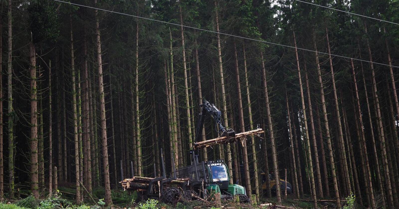 EU vil definerer måten det drives skogbruk på i Norge som ikke bærekraftig. Foto: Siri Juell Rasmussen