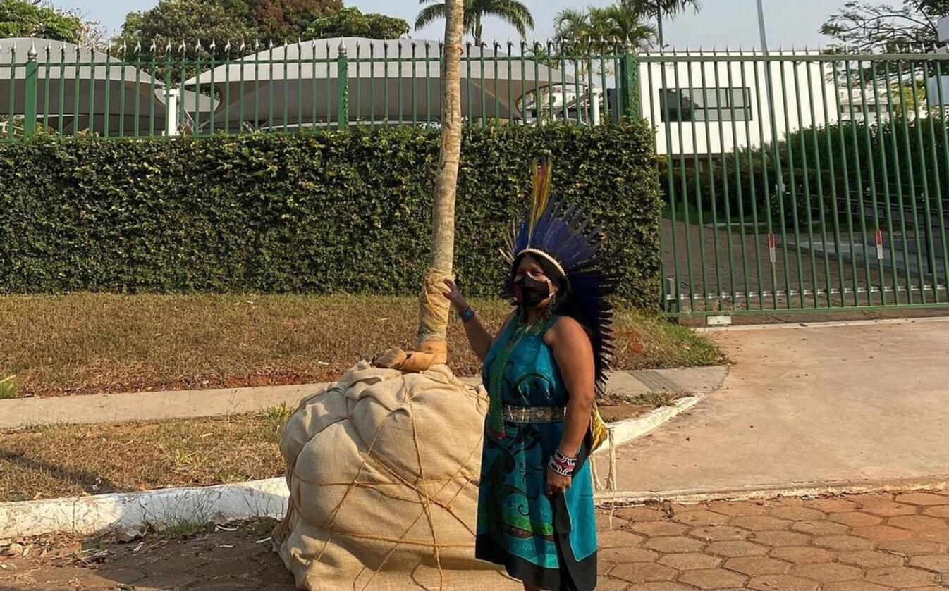 Urfolksleder Sonia Guajajara foran treet hun reddet fra skogbrannene i Amazonas. Ifølge Regnskogfondet søkte treet asyl ved den norske ambassaden fordi Norge er verdensledende i regnskogsbevaring. Foto: Sonia Guajajara/APIB