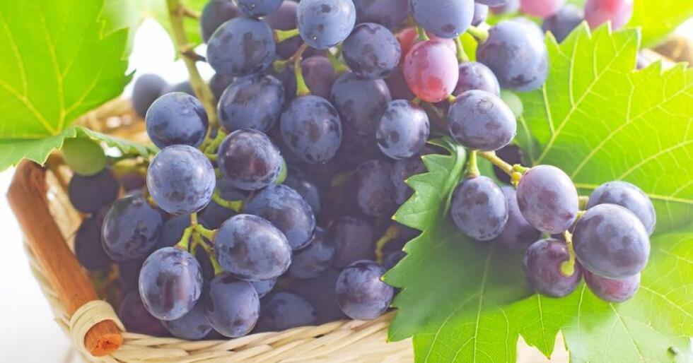 Det produseres mellom 2000 og 3000 liter norsk vin i året for kommersielt salg, anslår Norske Druedyrkere. Foto: Colourbox