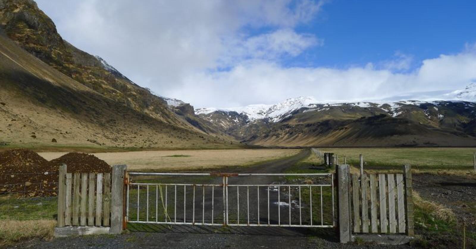 Island har svært god helsestatus i landbruket, og det har vært avgjørende for denne avtalen, skriver samvirkebedriftene. Bildet viser Thorvaldseyri, ved Eyjafjallajökull. Ólafur Eggertsson driver med korn, kjøtt og melkeproduksjon på gården.