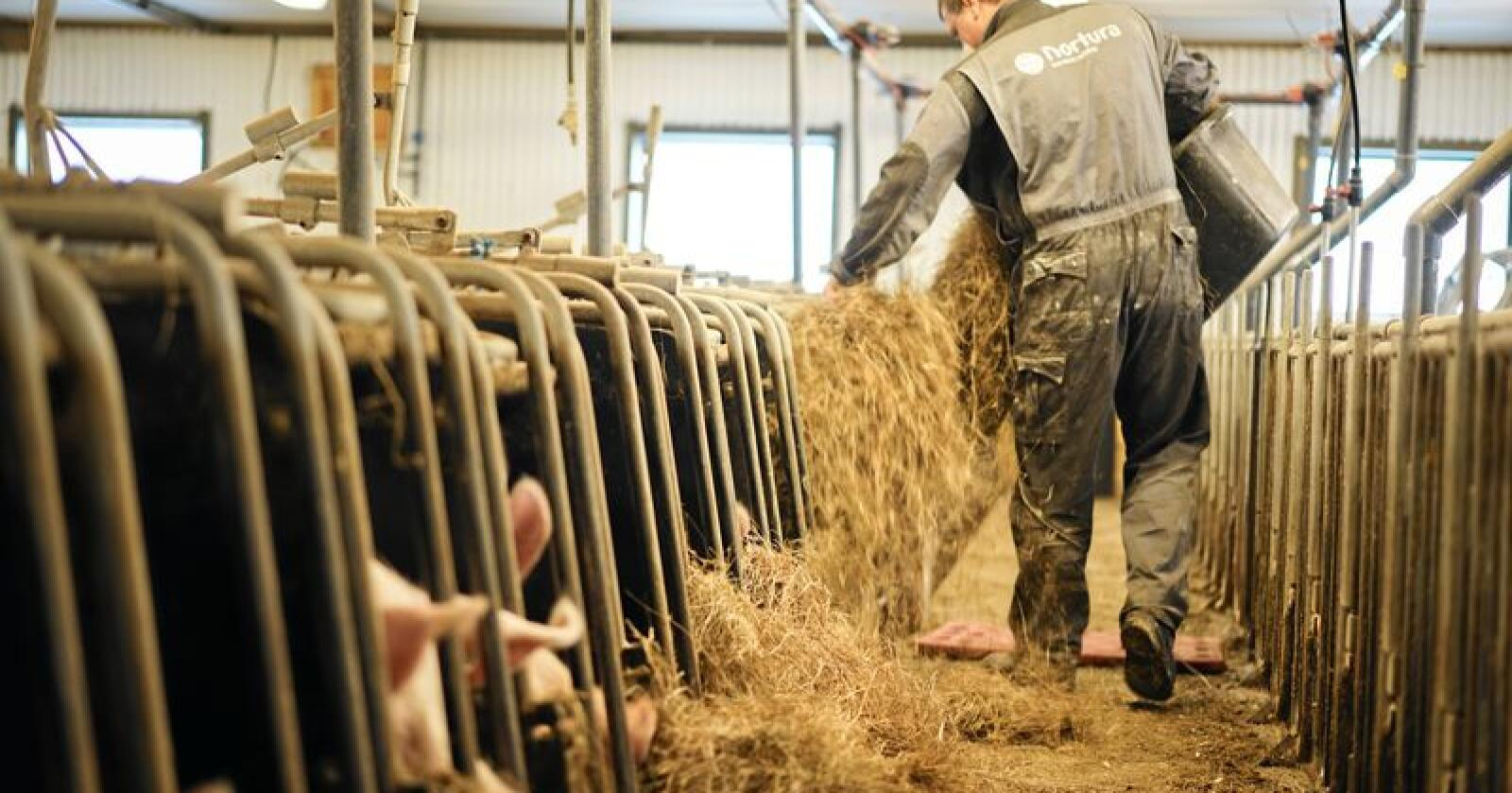 Individ eller flokkdyr: Er det bonden eller landbruksministeren som styrer utviklingen på gården? Foto: Benjamin Vogl