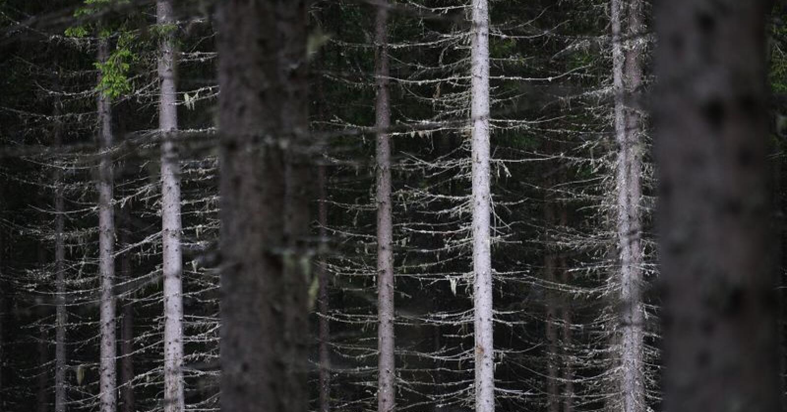 Illustrasjonsbilete. Foto: Siri Juell Rasmussen
