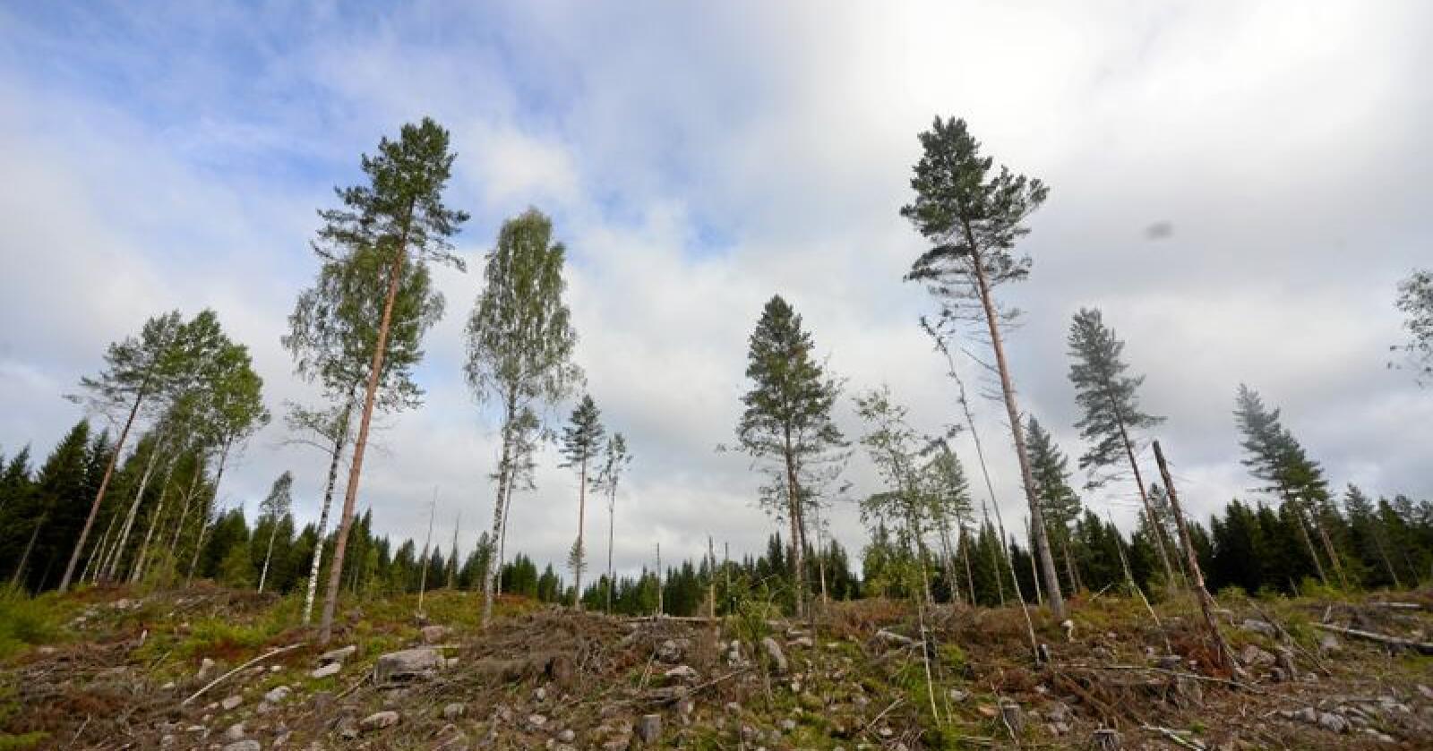 Det er behov for tømmer hele året for å holde blant annet industrien og entrepenørene i gang. Foto: Siri Juell Rasmussen