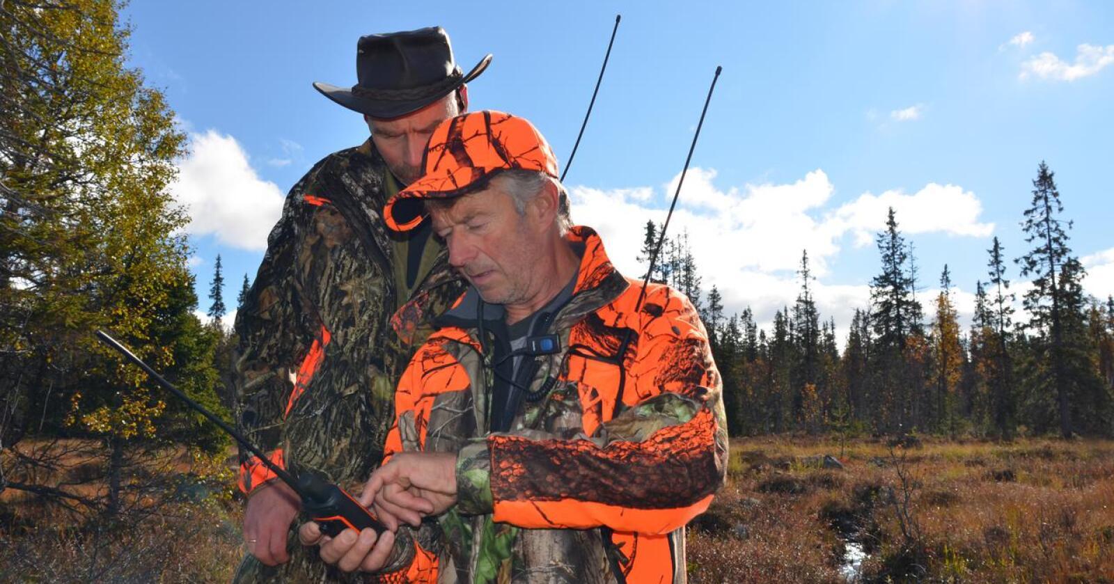 Størst på elg: Det er Innlandet og Trøndelag som er de største elgjaktfylkene. Under siste elgjakt ble det felt nesten 8 700 dyr i Innlandet. (Arkivfoto fra Engerdal)