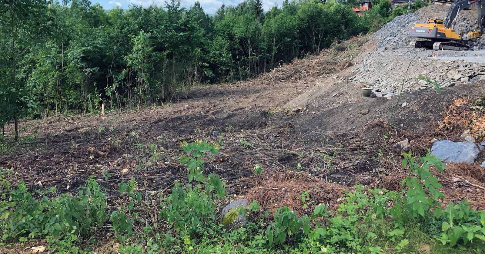 All vegetasjon ble fjernet i naturreservatet, noe som førte til 30.000 kroner i bot for maskinføreren. Foto: Statens naturoppsyn