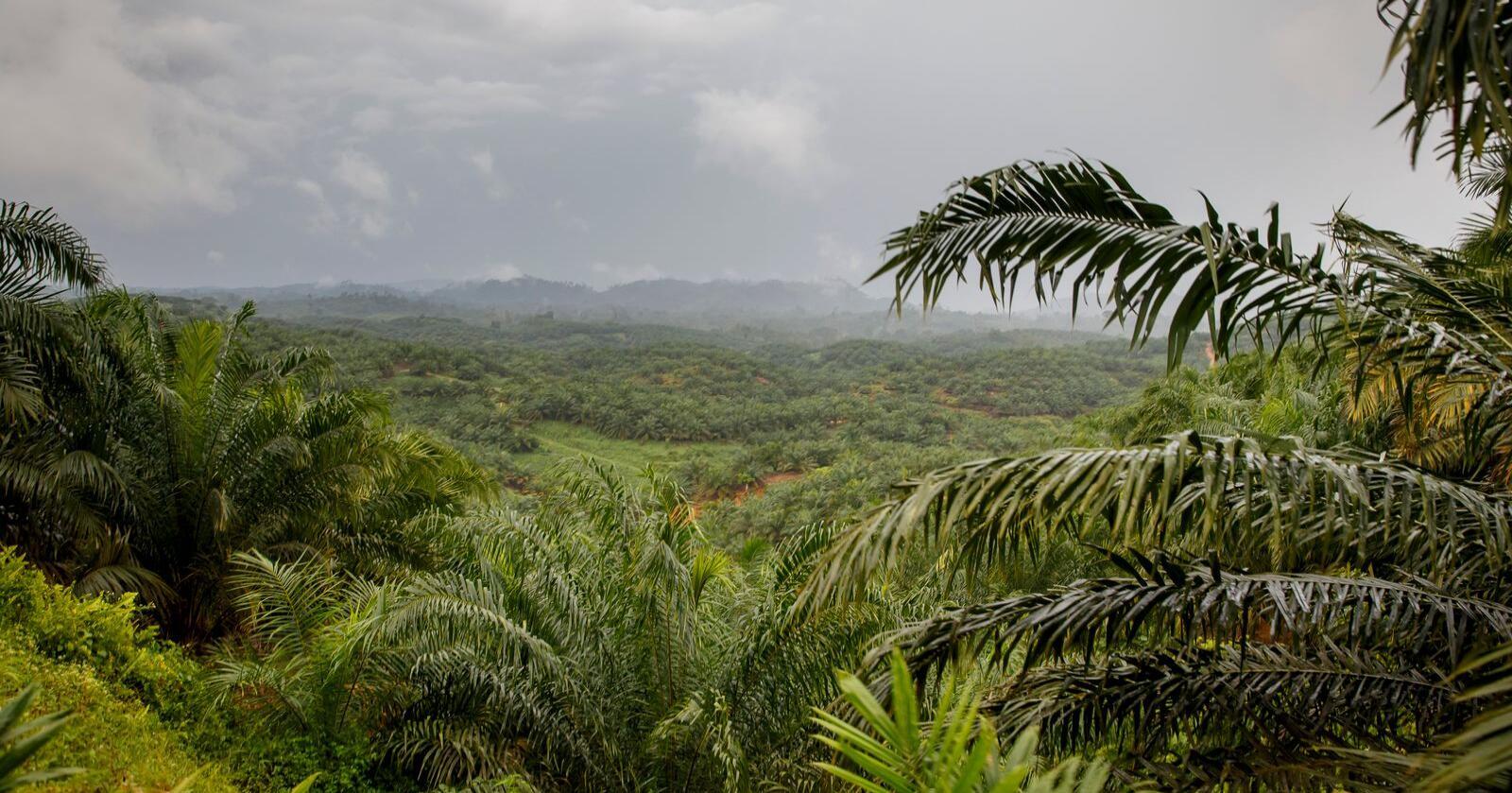 Sumatra i Indonesia er et av områdene i verden der regnskogen ødelegges i stort omfang. Arkivfoto: Foto: Heiko Junge / NTB