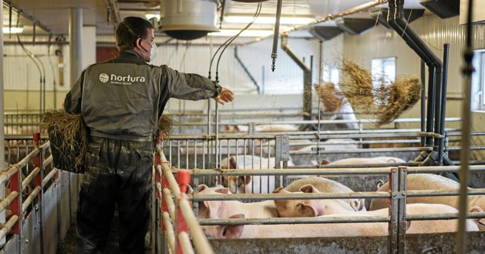 Alle Norturas slaktegrisprodusenter har vist hordan produksjonen deres foregår. Foto: Benjamin Hernes Vogl