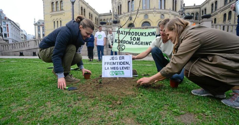 Treet ble plantet uten tilatelse, men demonstrantene ble ikke stanset under plantingen. Foto: Siri Juell Rasmussen
