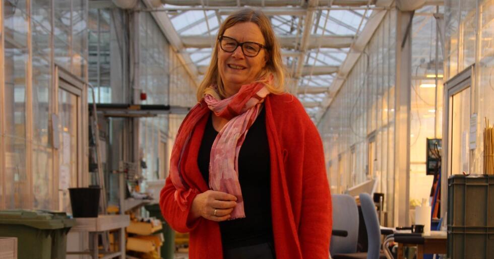 Bioteknolog og professor Trine Hvoslef-Eide tror at den nåværende genteknologiloven favoriserer de store, multinasjonale foredlingsselskapene, fordi det er så kostbart å få godkjent genredigerte planter. Hun håper at den reviderte loven kan gjøre det enklere å få tilpassede sorter ut til produsentene.  Foto: Kristin Bergo
