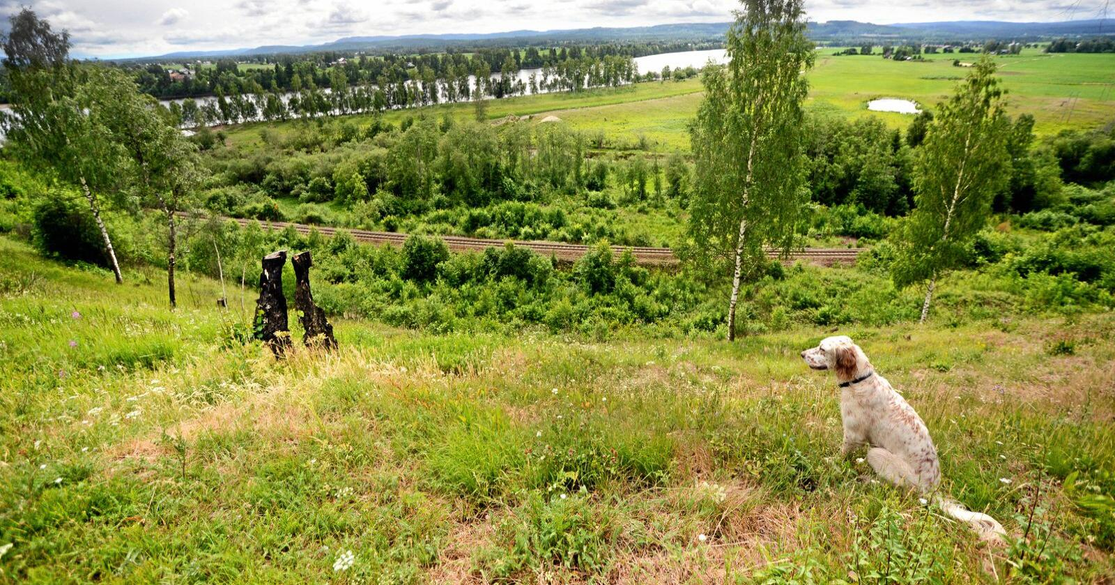Flere organisasjoner vil ha strengere regler for vindkraftutbygging i landet, og større vern av natur. Foto: Siri Juell Rasmussen