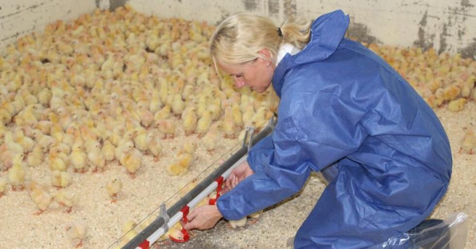 Torill Moseng er leder i Veterinærforeningen. Hun har ikke gitt opp kampen for å bevare viktige deler av dagens veterinærvaktordning. (Foto: DNV)