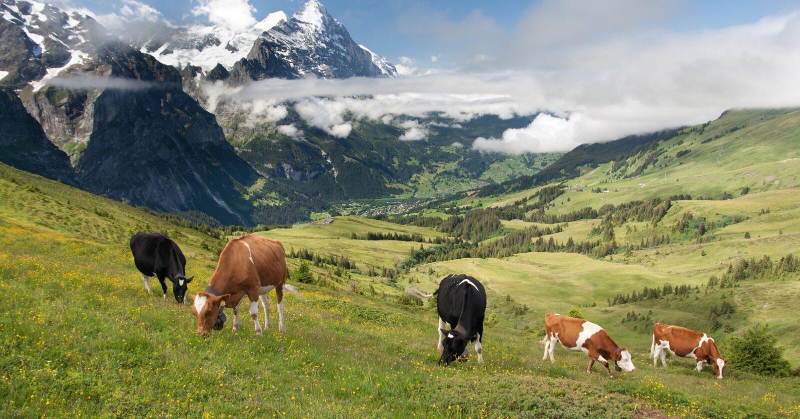 Økende isolasjon: Fremtiden vil vise om Sveits kan holde på sin selvstendighet i økende isolasjon rundt sine nærmeste handelspartnere, skriver innsenderen. Foto: Mostphotos
