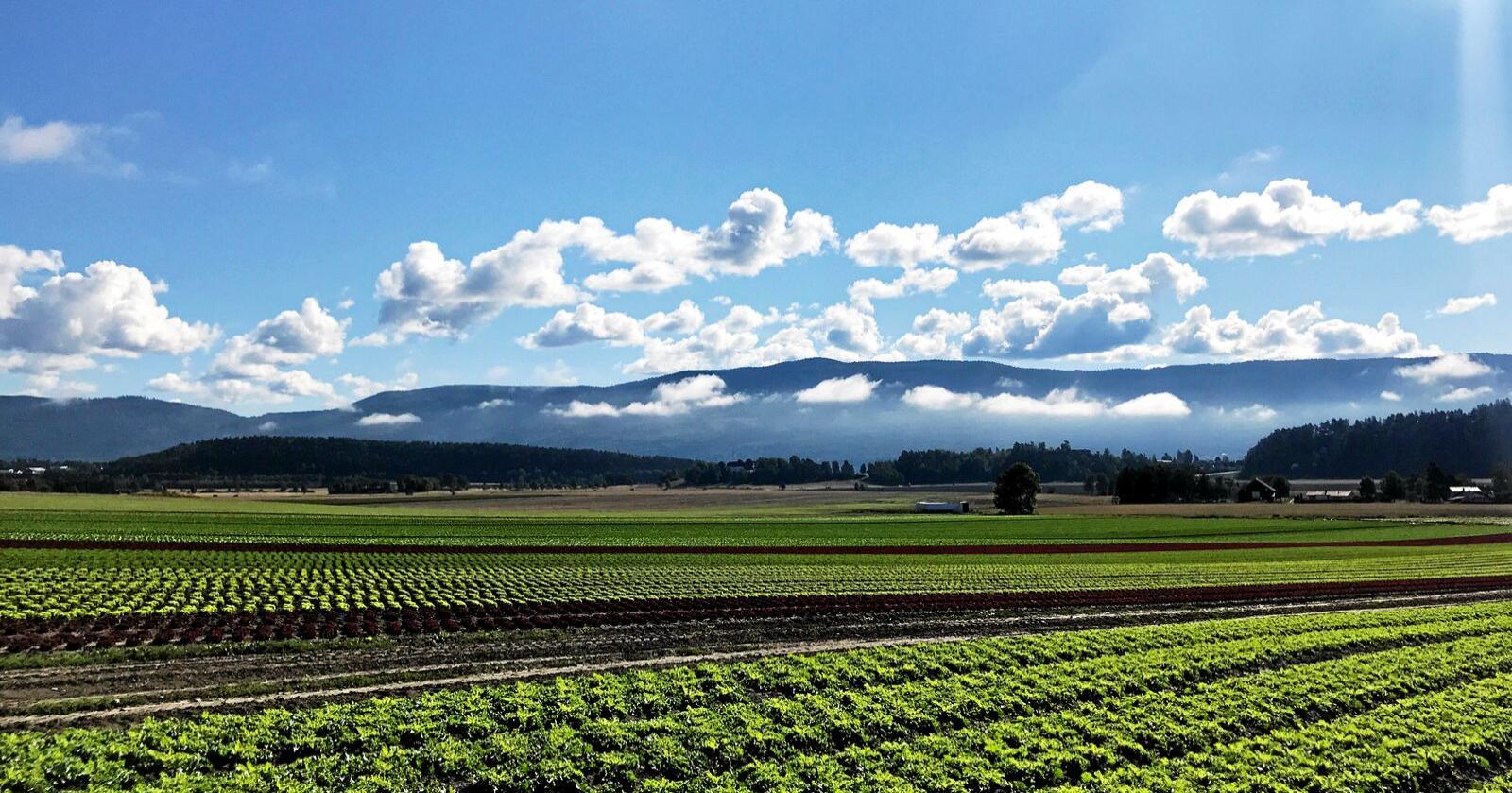 Grønt: Vi kan produsere mer frukt og grønnsaker i Norge. Foto: Lars Bilit Hagen