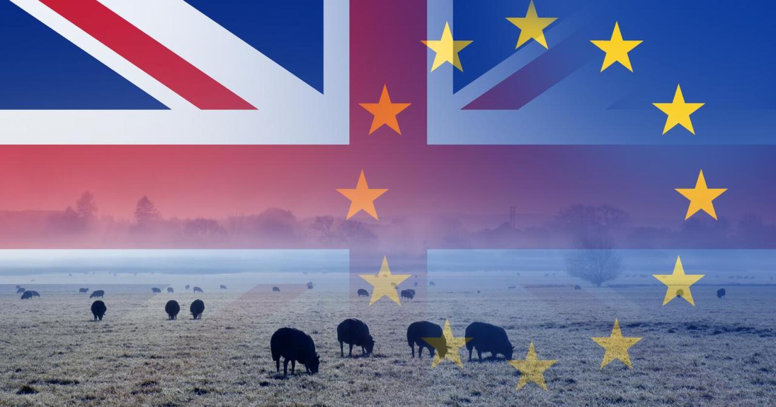 Nye kvoter: I dag signeres frihandelsavtalen der Storbritannia blant annet har fått kvoter på 100 tonn svinekjøtt, 100 tonn skinke, 50 tonn ribbe i desember, 120 tonn pølser og 158 tonn fjørfekjøtt. (Foto: Shutterstock/ Raggedstone)
