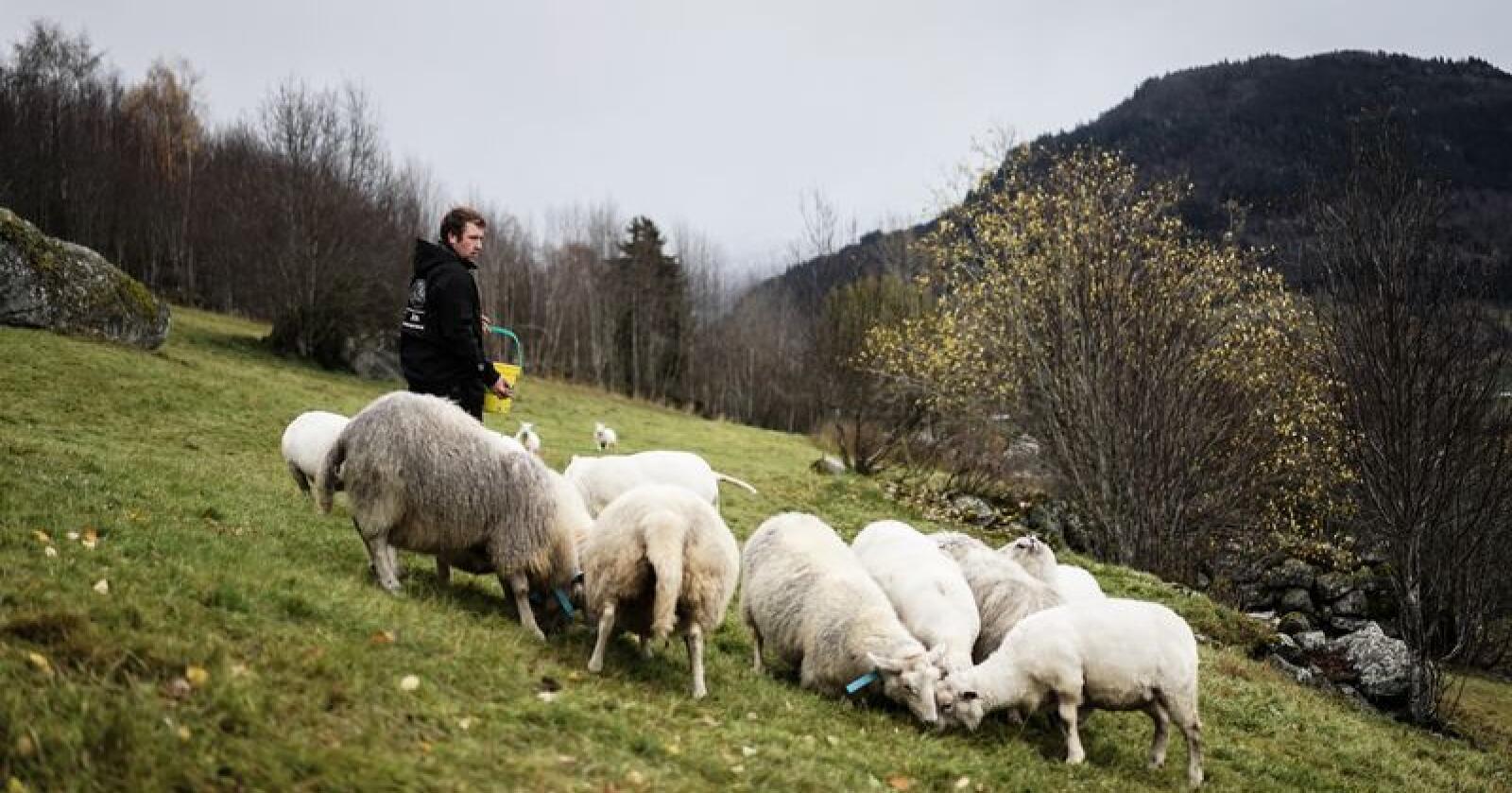 Olav Høyheim Einan fra Hafslo er kandidat i kåringen av Årets unge bonde 2018. Alle foto: Benjamin Hernes Vogl