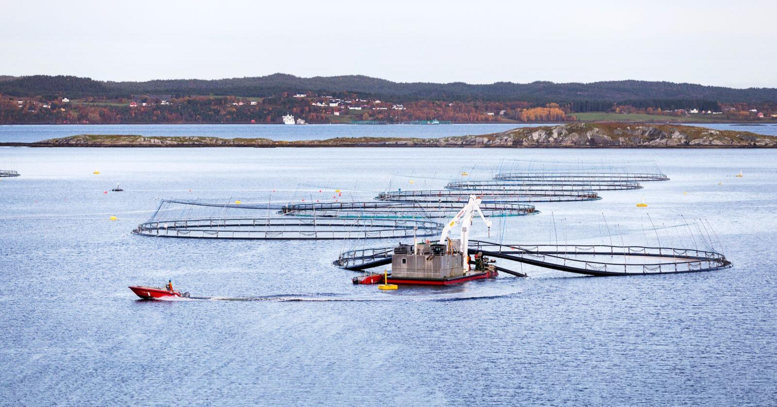 Anlegg for lakseoppdrett med spesialbåtar for fiskeoppdrett utanfor Hitra, på trøndelagskysten. Foto: Gorm Kallestad / NTB scanpix / NPK