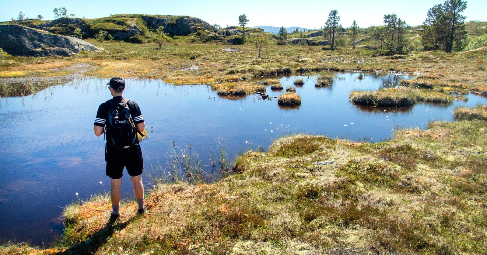 Myr- og våtmarksområder er blant naturtypene regjeringen ønsker å verne mer av. Foto: Gorm Kallestad / NTB