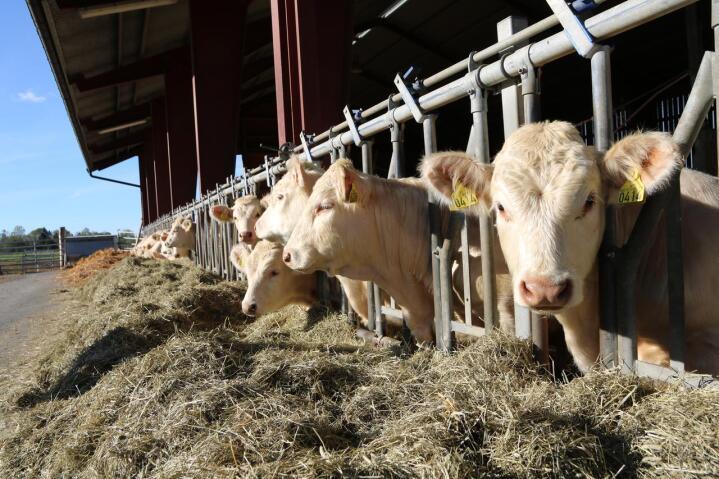 I SKUFFEN: Hvis driftskalkylen på det nye ammekufjøset er avhengig av en lønnsslipp fra utenfor landbruket for å gå opp, burde kanskje planen puttes i en skuff igjen. Illustrasjonsfoto: Øystein Heggdal