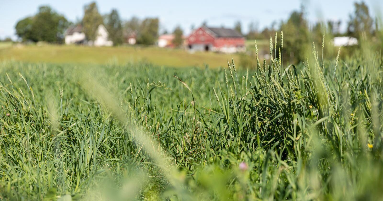 Illustrasjonsfoto: Audun Braastad / NTB