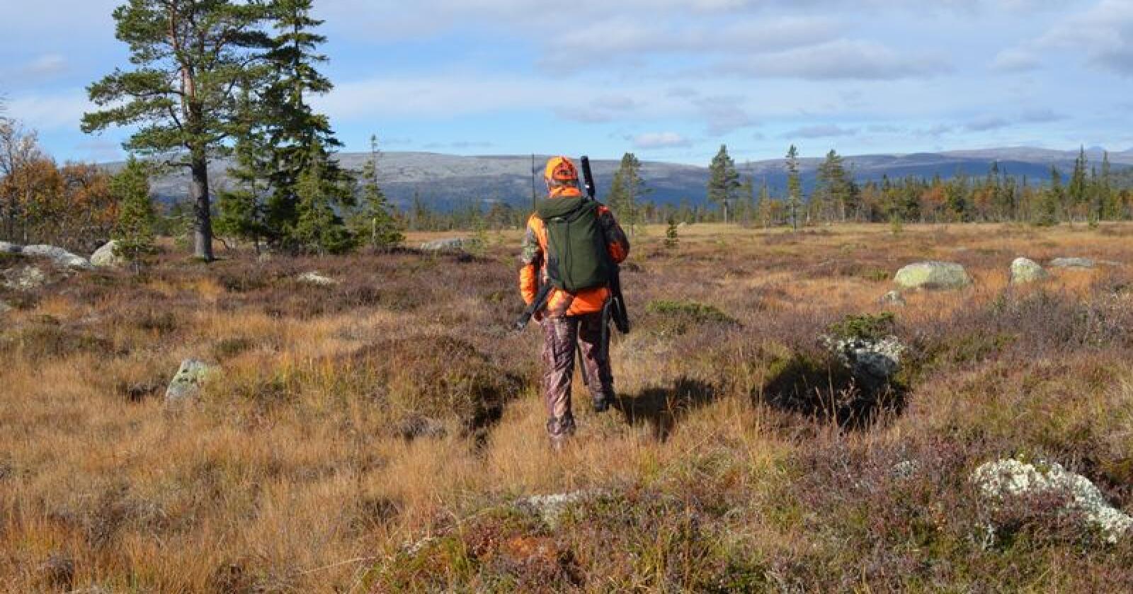 Kvernet elgkjøtt som selges i norske butikker, kan inneholde store mengder blyrester. Illustrasjonsfoto: Liv Jorunn Denstadli Sagmo