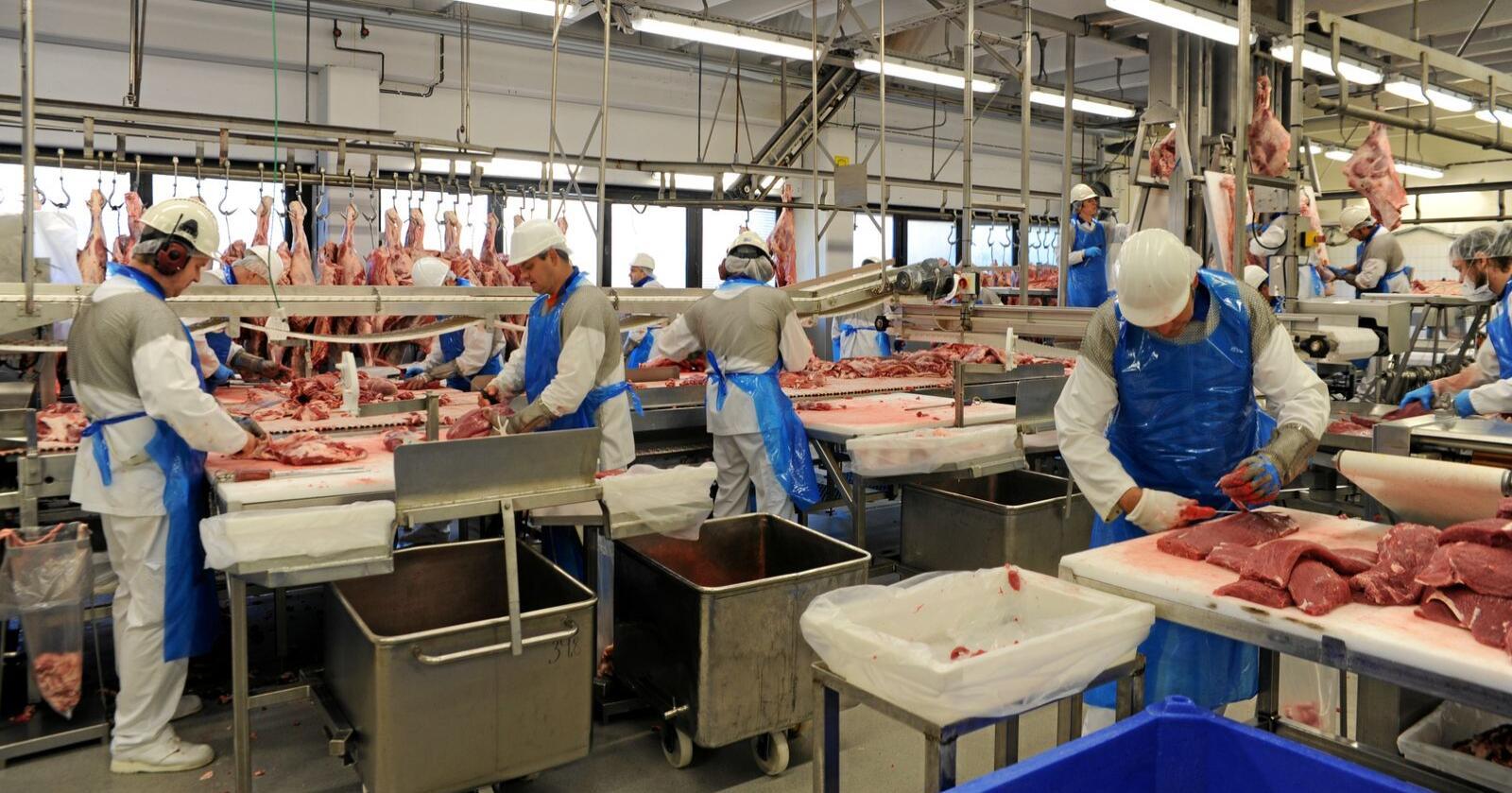 På slakteriet på Gol er det behov for sesongarbeidere i lammesesongen. Foto: Mariann Tvete
