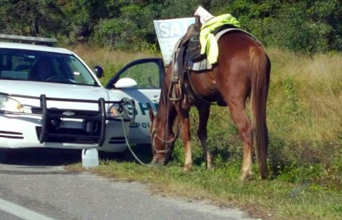 Hesten er bundet til politibilen til Polk County. Den 58 år gamle kvinnen ble pågrepet for å ha ridd på hesten med promille. Foto: Diane Dodge via AP / NTB scanpix