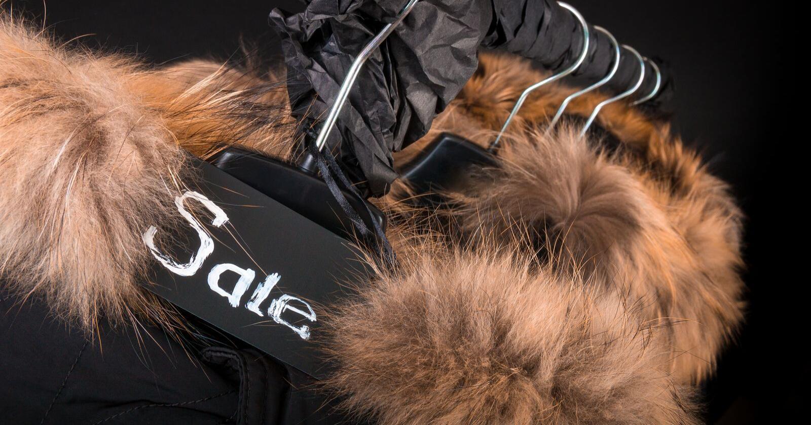 Pels i krager på vinterjakker er ikke uvanlig. Nå dropper Canada Goose prærieulv-pels på sine jakker. Illustrasjonsfoto: Illia Bondar/Mostphotos
