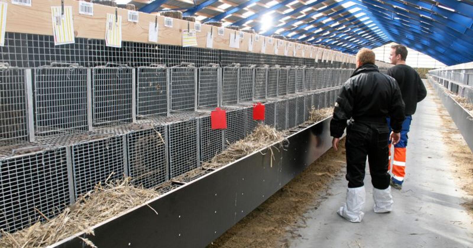 Kompetanse: Tilsyn med dyrehald kan bli utført av inspektørar utan spesifikk fagkompentanse stadfestar Mattilsynet. Dyrevernnemnder kan også reise på inspeksjonar åleine. Illustrasjonsfoto: Bjarne Bekkeheien Aase