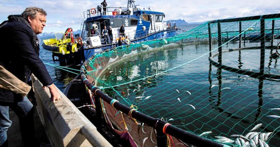 Fiskeriminister Harald T. Nesvik besøkte mandag i Mortenlaks i Lødingen, et av selskapene som er rammet av algene. Her ute ved merdene ved Rinøya ser han død laks ligge med buken opp flytende i vannet. Foto: Berit Roald / NTB scanpix.