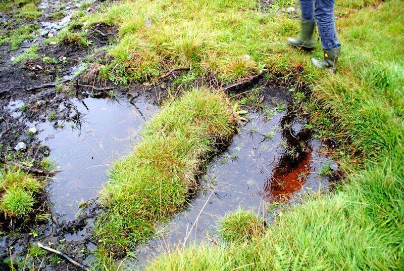 Mange bønder har kritisert forbudet mot nydyrking av myr som hindrer mange bønder å utvide produksjonen. Foto: Lars Bilit Hagen