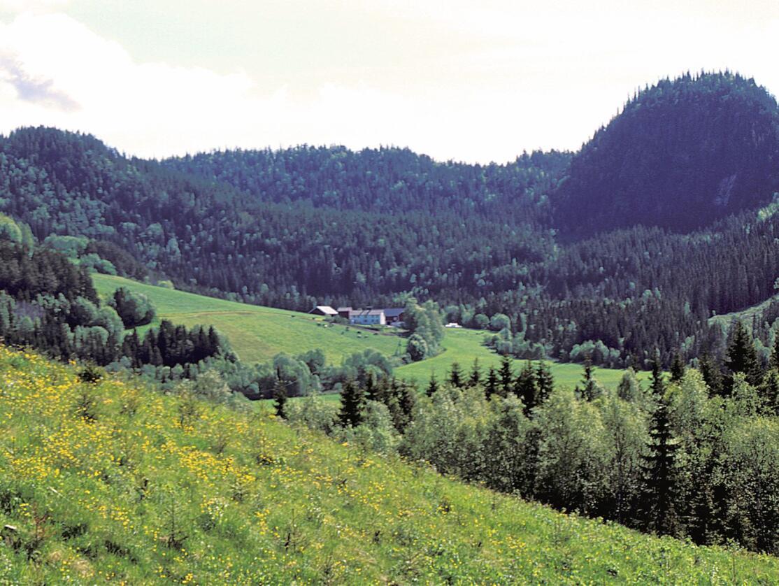 I 1992 kom det en tilskuddsorning for å plante trær på innmark som var ute av drift. Ordningen ble avviklet i 2002.