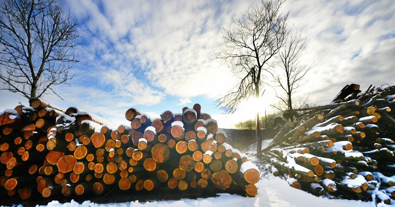 Tømmer: Ren råvareeksport er lite lønnsomt og svært sårbart da Norge blir et marginalmarked som må tåle store svingninger i pris, skriver artikkelforfatterne. Foto: Siri Juell Rasmussen