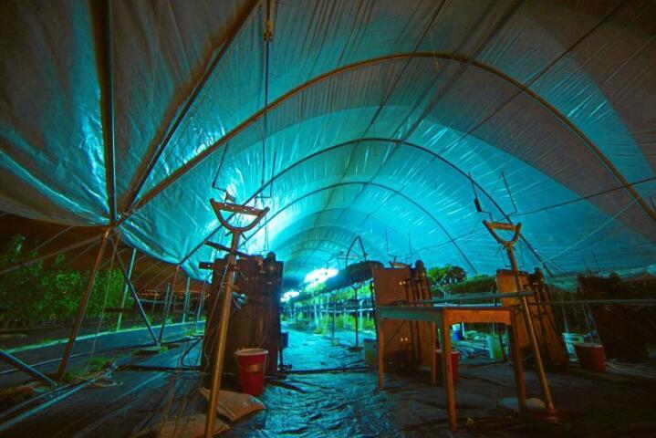 UV-lys testes som mulig tiltak mot skadegjørere. Foto: Maximillian Pircher