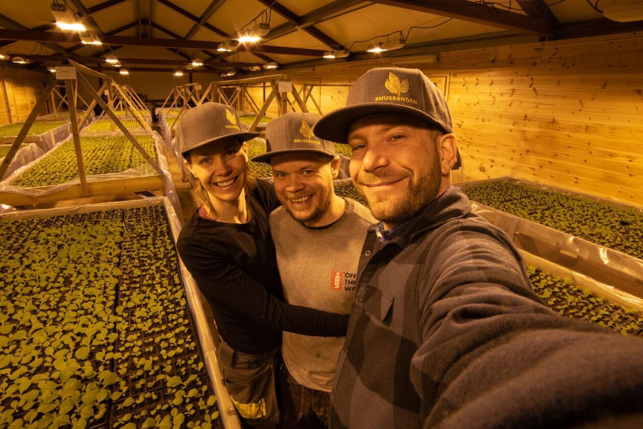 Snusbonden AS består av Anna Widén-Björk (f.v.), Håvard Mordal Dretvik og Eirik Volent. Her tar de en «selfie» inne på låven der de dyrker tobakksplantene. Foto: Snusbonden