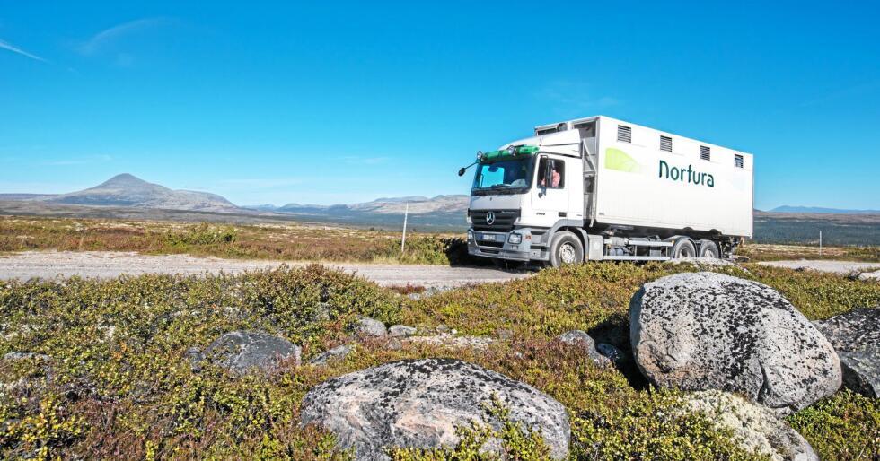 Transport: Nortura har startet et eget selskap som skal foreta dyretransporter. Foto: Vidar Sandnes