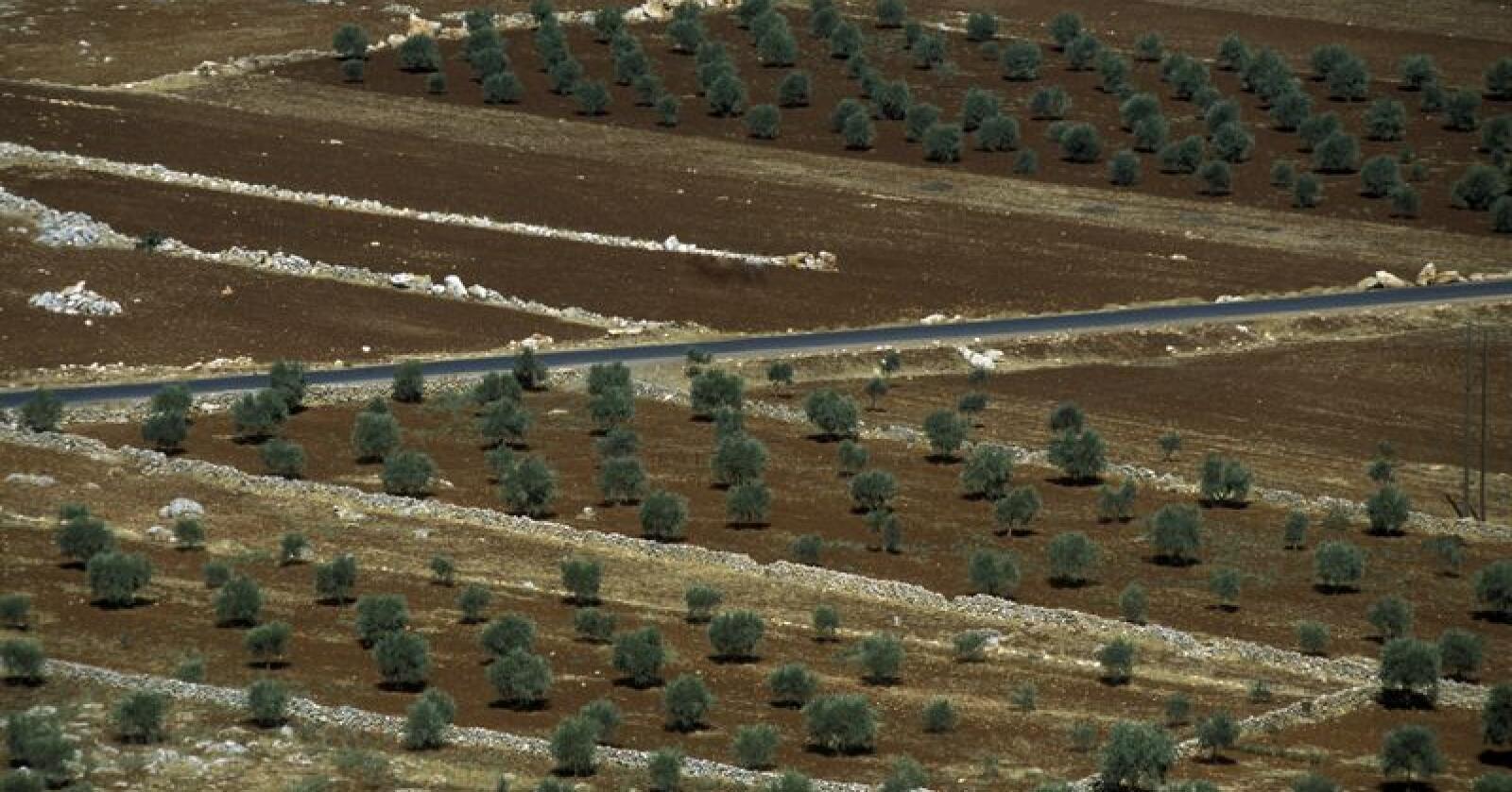 I tillegg til krig og konflikter, har et stadig mer ustabilt vær rammet syrisk matproduksjon hardt. Imidlertid er det nå en viss bedring å spore i landets matsikkerhet, melder FAO. Bildet viser landbruk nær byen Aleppo i Syria. Foto: Urs Flueeler