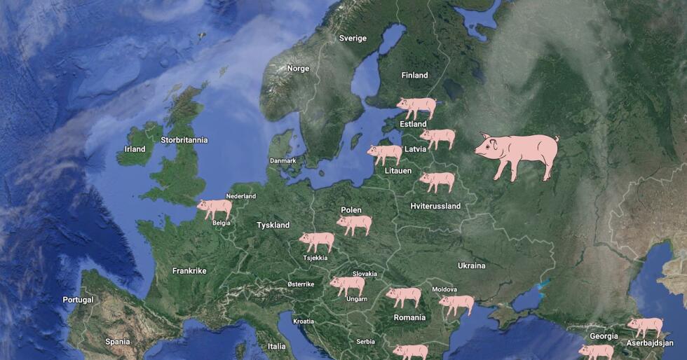 Afrikansk svinepest har kommet til stadig flere land i Europa. Før jul ble den svært smittsomme dyresykdommen konstatert bare 21 kilometer fra den tyske grensen i Polen. Illustrasjon (arkiv): Google / Bondebladet
