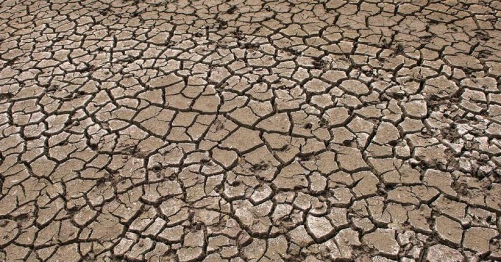 Endringer i landbruket må til for å kutte klimautslippene, slår FNs klimapanel (IPCC) fast i en ny rapport. Foto: Jens Meyer / AP Photo / NTB scanpix