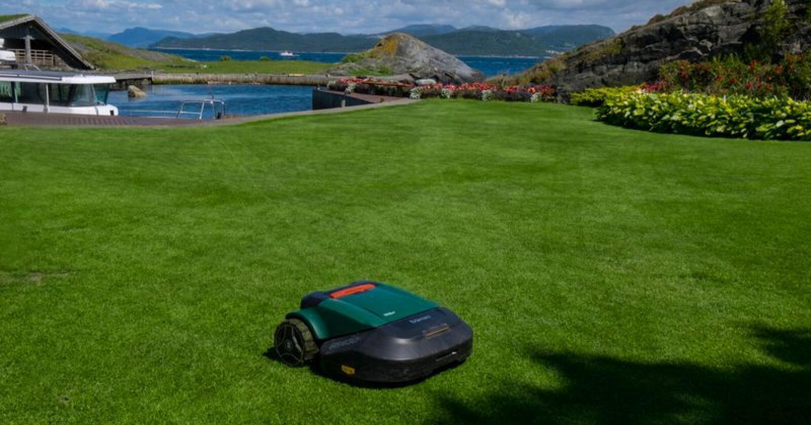 Med en robotgressklipper slipper du å klippe gresset selv, men ifølge Norsk entomologisk forening kan slike gressklippere skade det biologiske mangfoldet. Foto: Vidar Ruud / NTB scanpix
