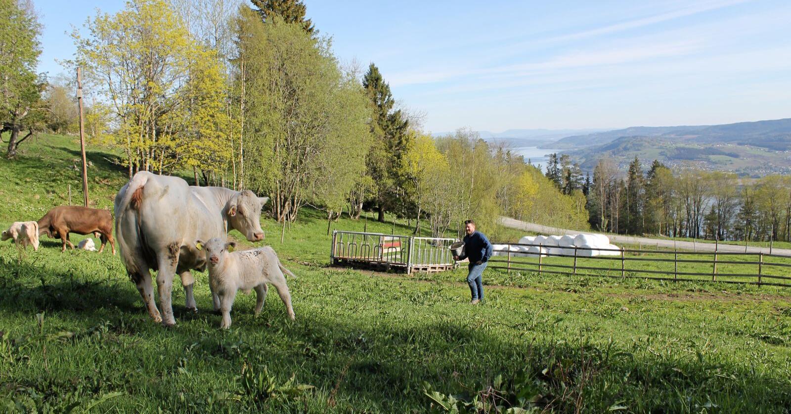 Stridens kjerne: Oslo Economics mener Nibio ikke har regnet med investeringskostnader ved omlegging av norsk matproduksjon og kosthold. (Arkivfoto: Norsk Landbruk)