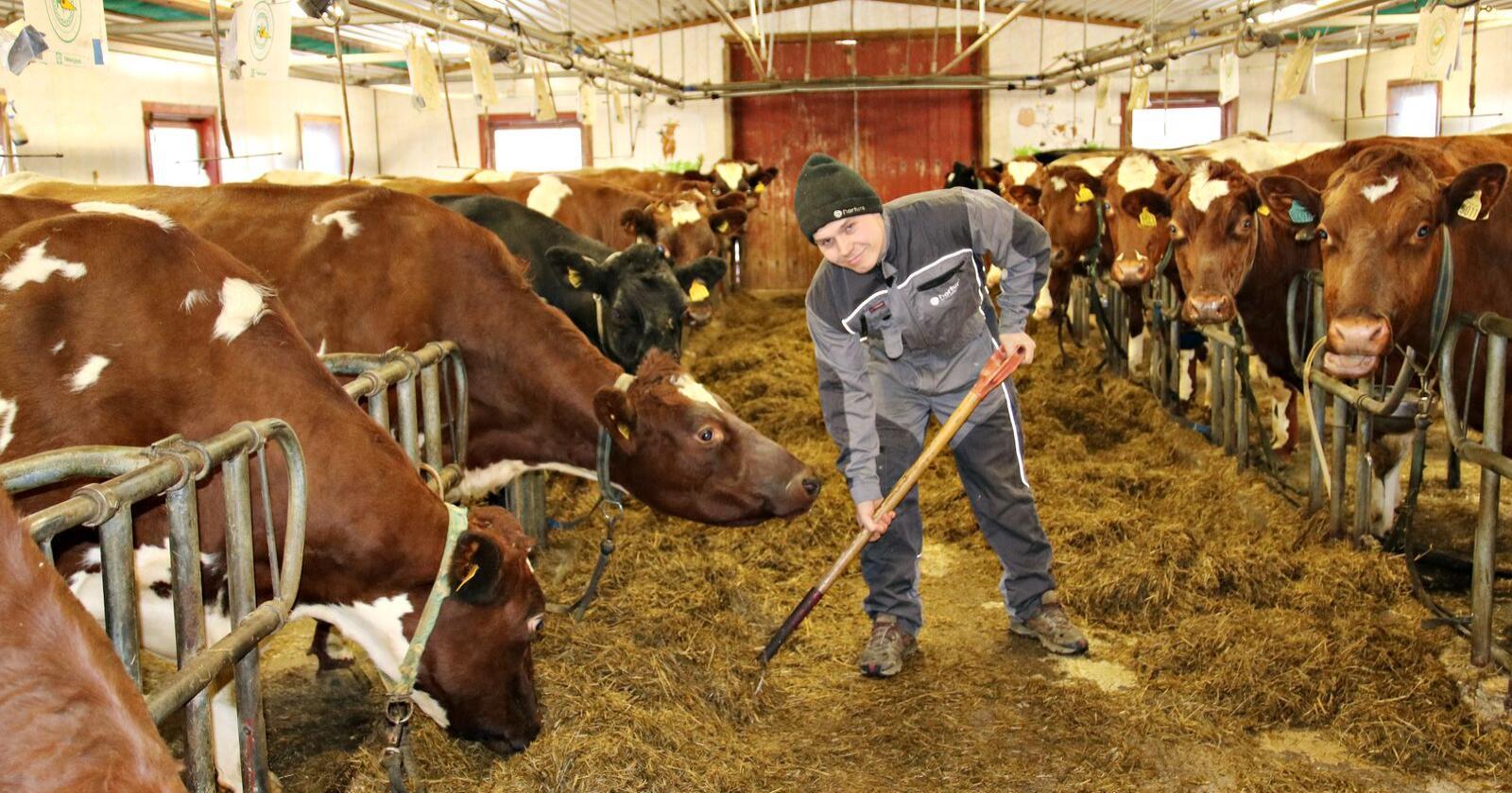 Kåret: Øistein Aasen fra Tolga er Årets unge bonde. (Foto: Lars Olav Haug)